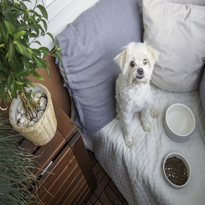 Medium Pet Water Bowl | Concrete Grey